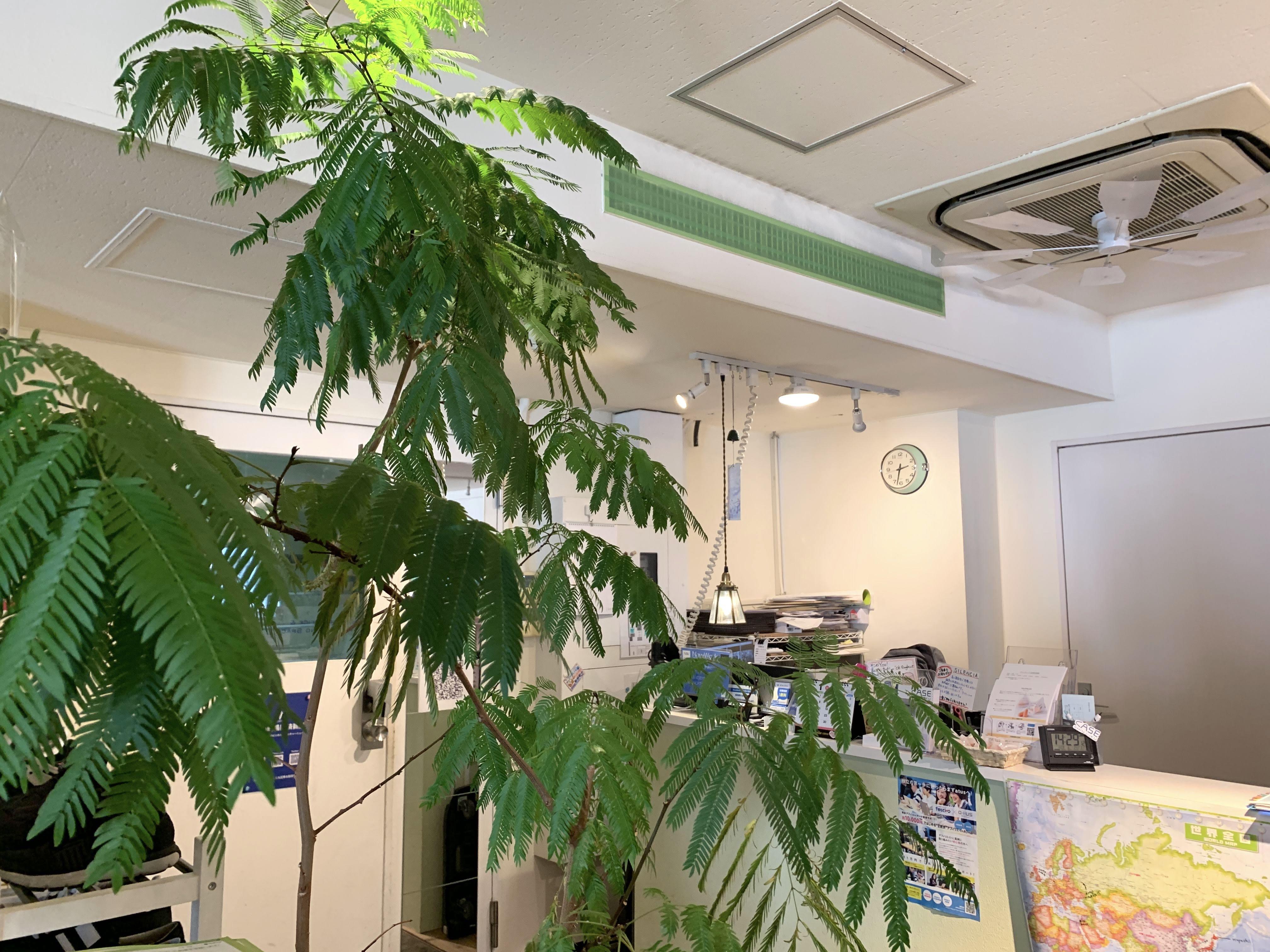 加湿器を入れた後の観葉植物の様子